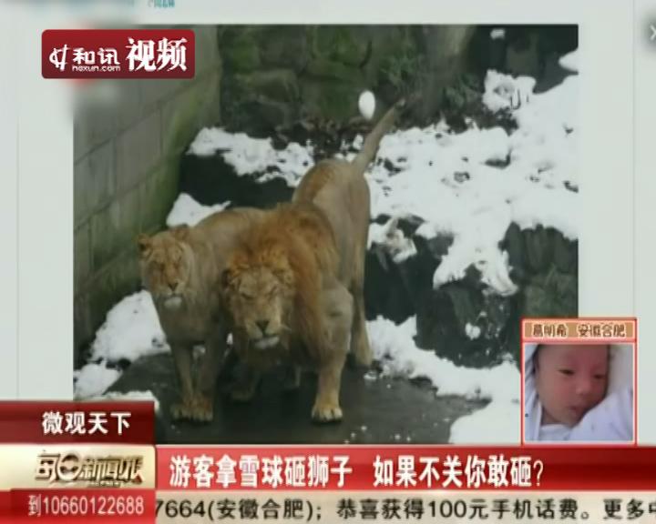 动物园游客搓雪球砸狮子取乐 公狮怒视2013年1月7日主持人