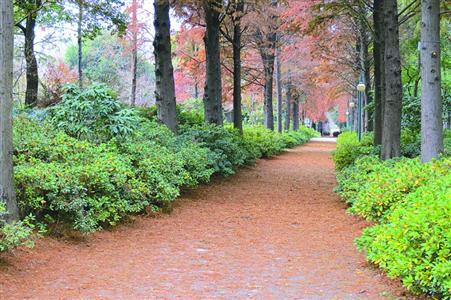 秋游滨江森林公园
