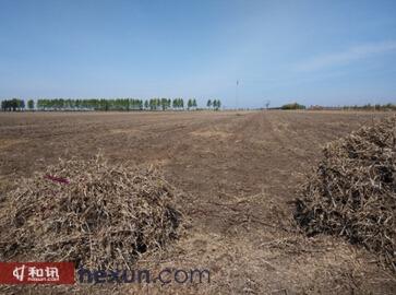 图1、在富锦永福村较大面积大豆地块并已收割