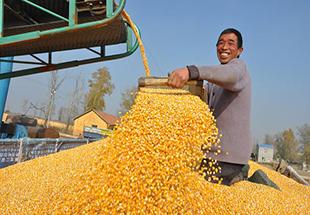 中央农村经济工作会议今日开幕 聚焦农业现代化