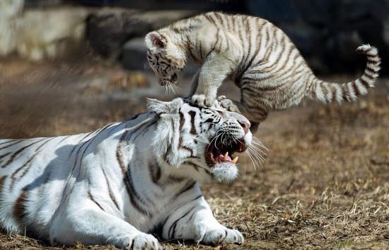 野生动物保护法修订草案通过