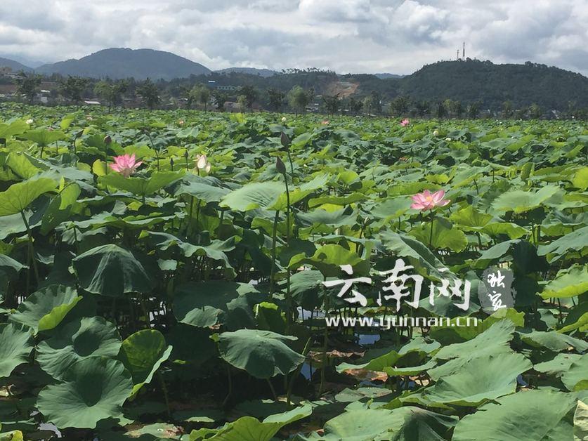 """有""""绿""""才任性——云南环保世纪行采访团走进保山的美丽乡村(四)"""