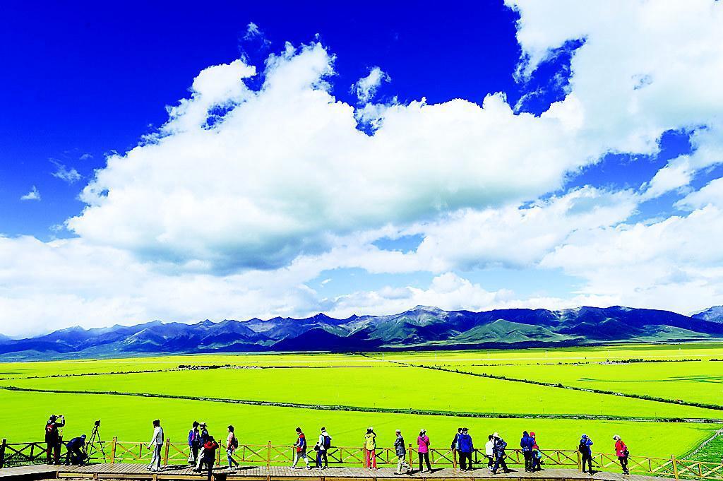 """青海省海北藏族自治州门源回族自治县近50万亩油菜花盛开,形成""""百里"""