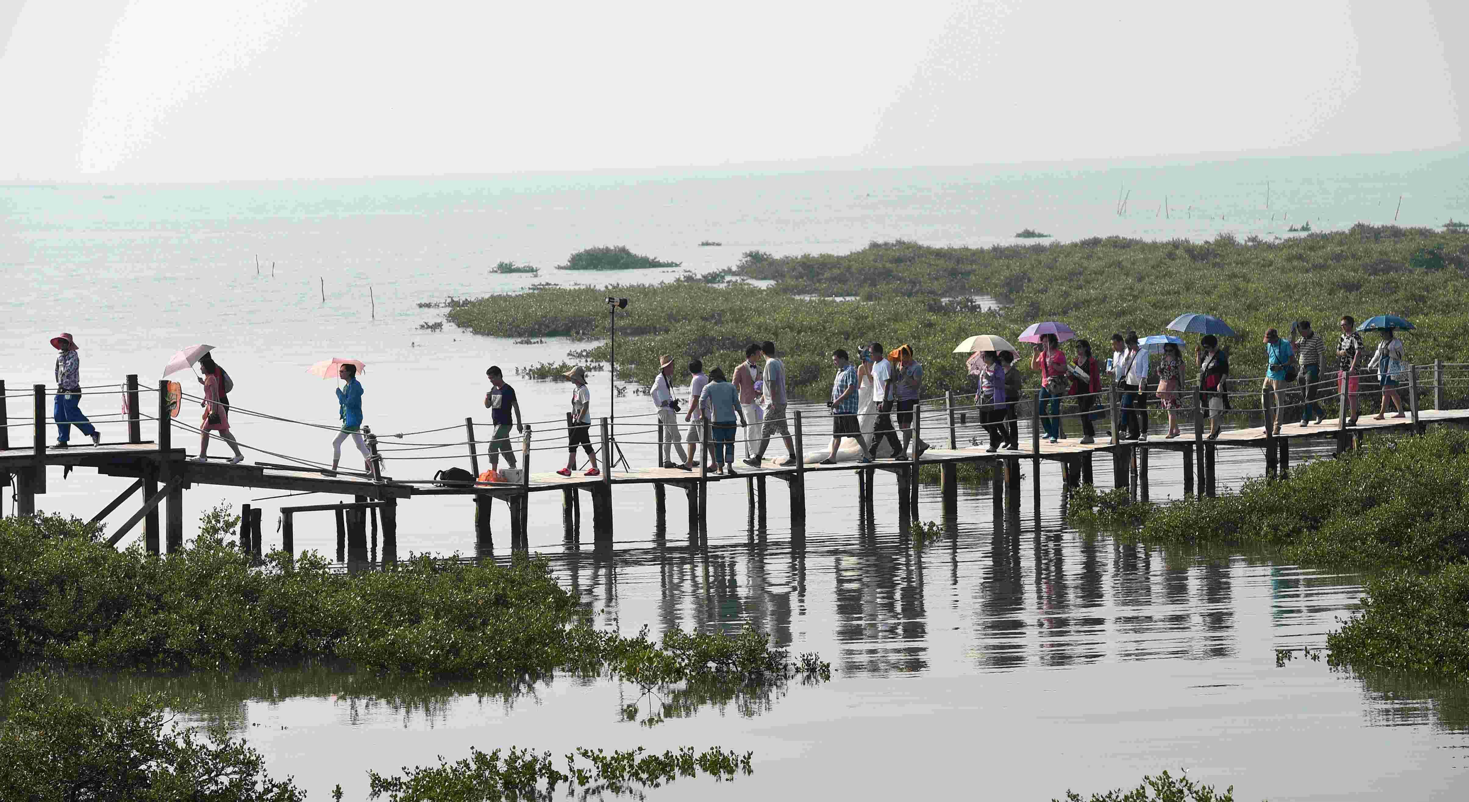 (锐视角)(1)广西北海:红树林丰茂游客来